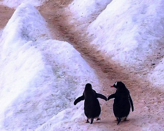 penguin-love